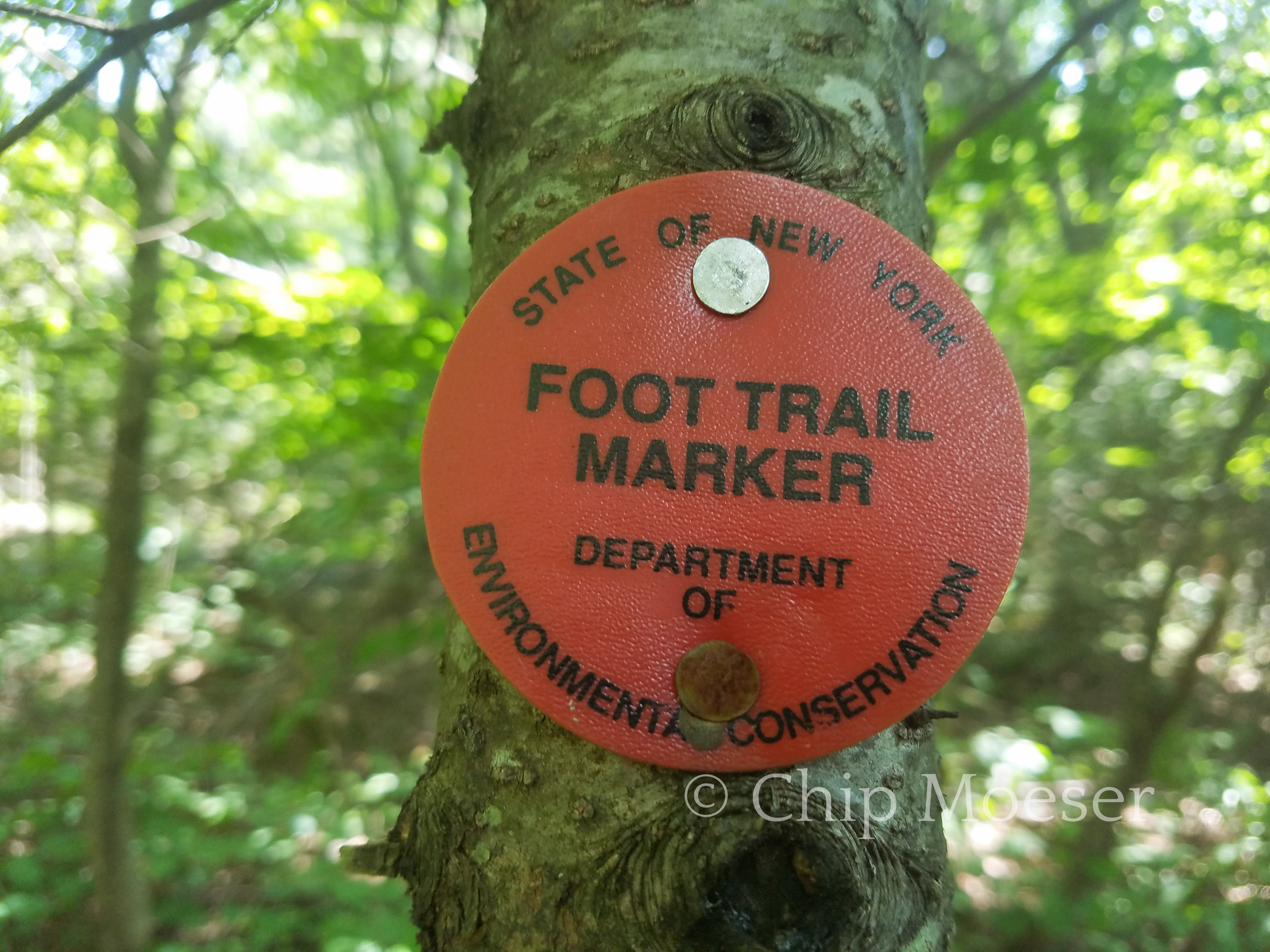 DEC Foot Trail marker